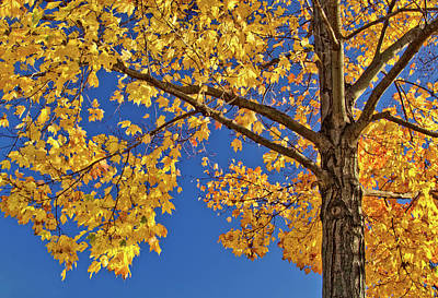 Photograph - Vivid Color Contrasts Of Fall by Carolyn Derstine