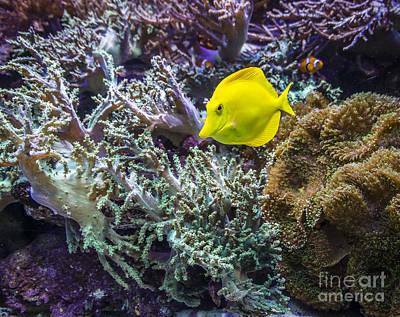 Photograph - Vivid Fish by Joann Long