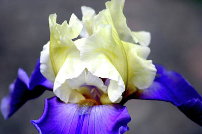 Abstract Oil Paintings Color Pattern And Texture - Vivid Iris 6622 H_3 by Steven Ward