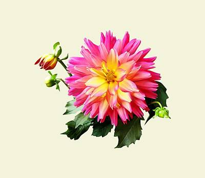 Photograph - Vivid Pink And Yellow Dahlia by Susan Savad