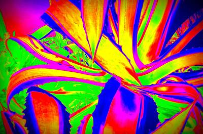 Photograph - Abstract Succulent In Bold Colors by Karen J Shine