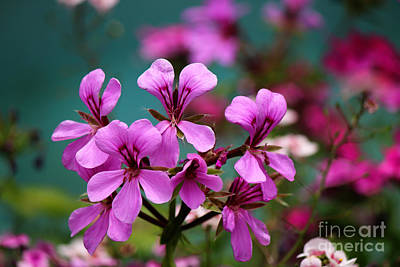 Photograph - Vivid Spring Colors by Jackie Farnsworth