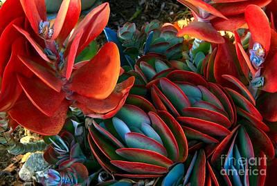 Splashy Photograph - Vivid Paddle-leaf Succulent by Jean Clarke