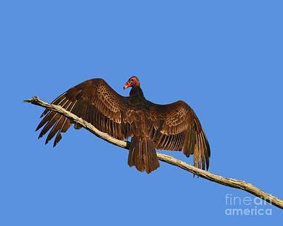 Art Print featuring the photograph Vivid Vulture .png by Al Powell Photography USA