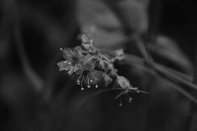 Photograph - Vividly Gray by Jessica Myscofski