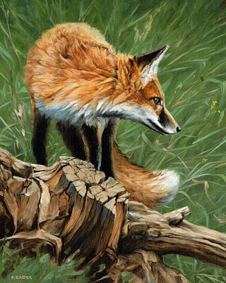 Red Fox Painting - Vixen by Peter Eades