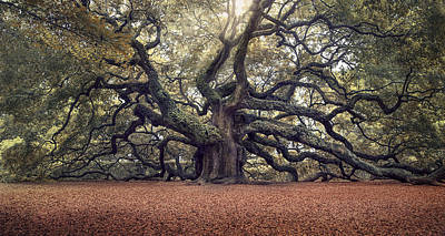 Angel Oak Photograph - Voices Of The Angels by Magda  Bognar