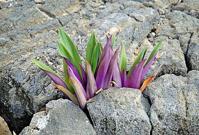 Photograph - Volcanic Leaves by Robert Meyers-Lussier