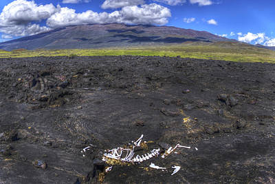 Photograph - Mauna Kea And Bones by Joe  Palermo