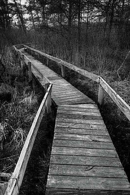 Volo Bog Boardwalk Print by Steve Gadomski