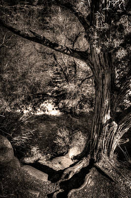 Photograph - Vortex Juniper Clinging To A High Perch by Roger Passman