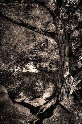 Photograph - Vortex Juniper Clinging To A High Perch by Roger Passman