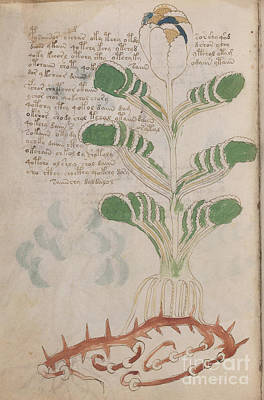 Drawing - Voynich Flora 05 by Rick Bures