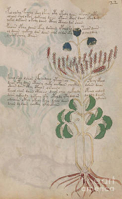 Drawing - Voynich Flora 06 by Rick Bures