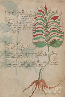 Drawing - Voynich Flora 10 by Rick Bures