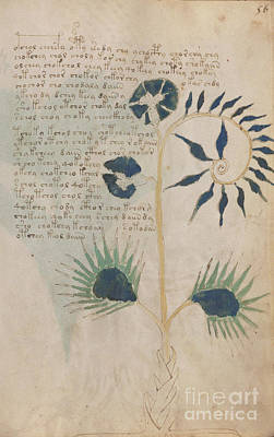 Drawing - Voynich Flora 12 by Rick Bures