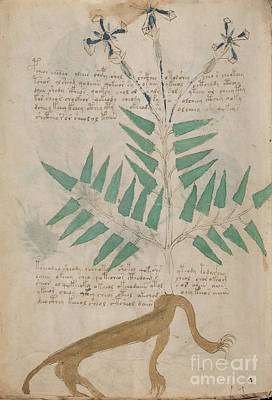 Drawing - Voynich Flora  21 by Rick Bures
