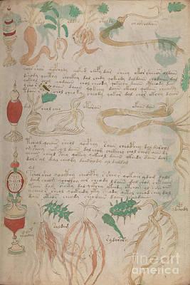 Drawing - Voynich Flora Pharma 03 by Rick Bures