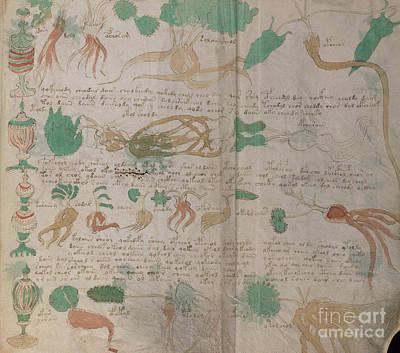 Drawing - Voynich Flora Pharma 04 by Rick Bures