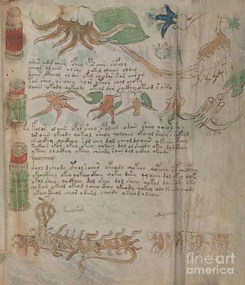 Drawing - Voynich Flora Pharma 14 by Rick Bures