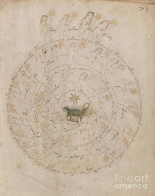 Drawing - Voynich Manuscript Astro Scorpio by Rick Bures