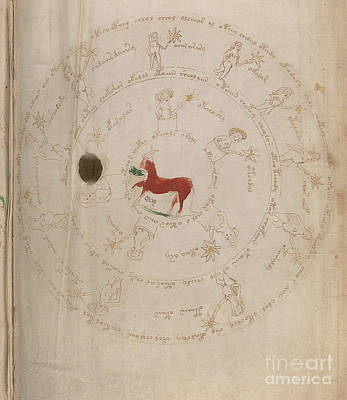 Drawing - Voynich Manuscript Astro Taurus1 by Rick Bures