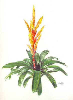 Epiphyte Painting - Vriesea 'dreamcicle Orange' by Penrith Goff