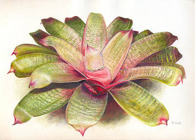 Epiphyte Painting - Vriesea Leinaala by Penrith Goff
