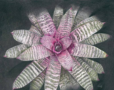 Epiphyte Painting - Vriesea Memoria Howard Yamamoto by Penrith Goff
