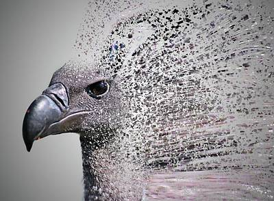 Griffon Photograph - Vulture Break Up by Martin Newman