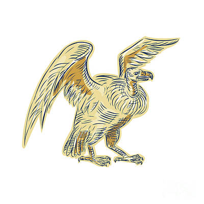 Buzzard Digital Art - Vulture Buzzard Etching by Aloysius Patrimonio