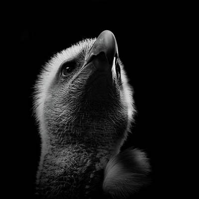 Photograph - Vulture by Kathryn Bell
