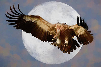 Photograph - Vulture Moon by Ericamaxine Price