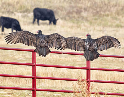 Art Print featuring the photograph Vulture Overlap by Bill Kesler
