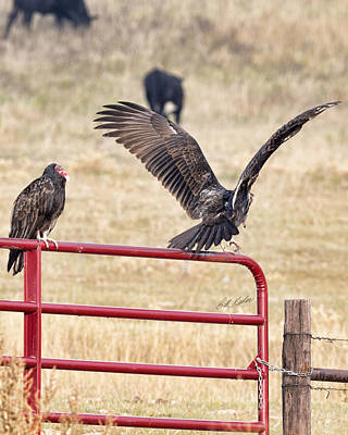 Photograph - Vulture Vee by Bill Kesler