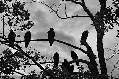 Photograph - Vultures And Cloudy Sky Bw by Dave Gordon