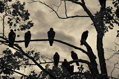 Vultures And Cloudy Sky Art Print by David Gordon