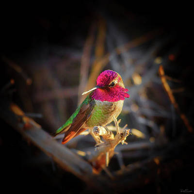 Photograph - Vying For Attention by Rick Furmanek