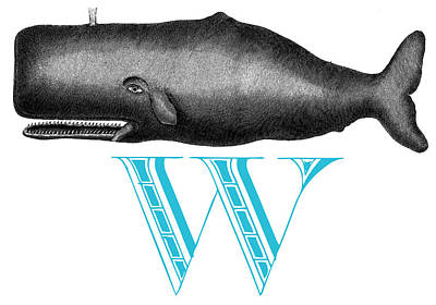 W Whale Art Print by Thomas Paul