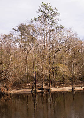 Photograph - Waccamaw Riverbank In Winter by MM Anderson