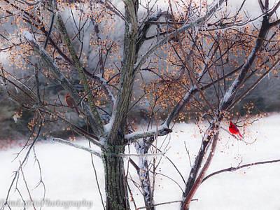 Photograph - Waching Over Me  by Kim Loftis