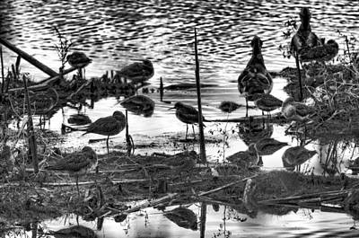 Photograph - Waders At Sackville Nb by Lawrence Christopher