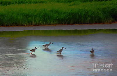 Photograph - Waders by Erica Hanel