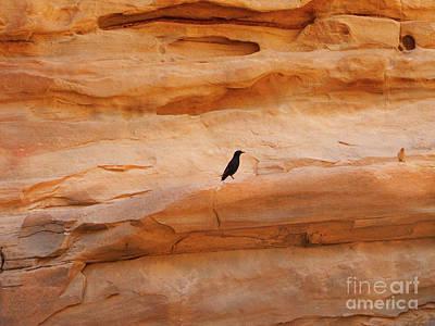 Photograph - Wadi Rum Birds by Donna L Munro