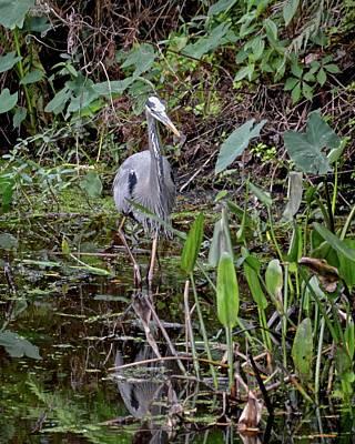 Photograph - Wading Across The Creek by Carol Bradley