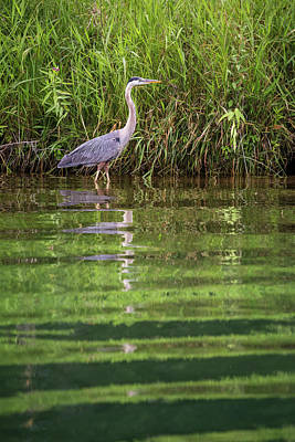 Photograph - Wading And Watching by Penny Meyers
