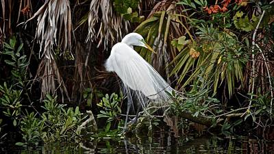 Photograph - Wading Bird by Carol Bradley