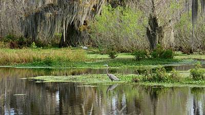 Photograph - Wading Bird Way by Carol Bradley
