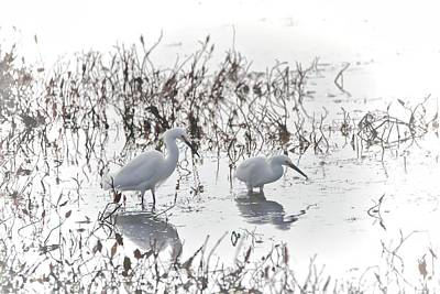 Photograph - Wading Egret Birds by Dan Sproul