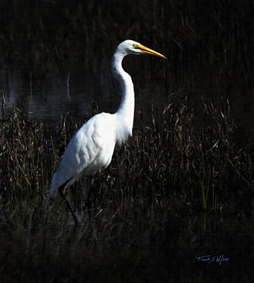 Photograph - Wading Egret by Frank Wilson